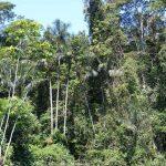 1280px-Amazonian_rainforest
